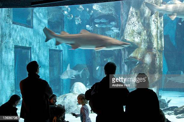 People watching sharks and other fish swimming in London Aquarium. More then 3,000 forms of marine life can be found swimming around under the former offices of the Grater London Council in County Hall, one of Europe's largest aquariums.