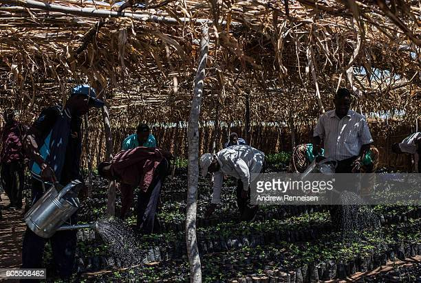 People water seedlings at a work for food program run by NGO's World Vision International and the World Food Program in the village of Ngwelelo which...
