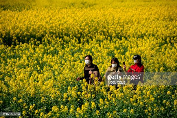 People wearing face masks walk along rapeseed farm where canola oil is taken in Jiujiang, Chinas central Jiangxi province on March 14, 2020. - China...