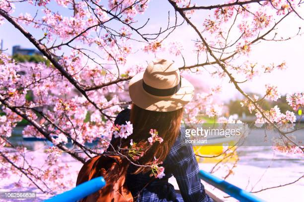 people with cherry blossom in japan. - hanami stock pictures, royalty-free photos & images