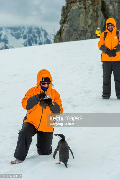 People with Chinstrap penguins on Half Moon near Livingston Island in the South Shetland Islands of the Antarctic Peninsula region.