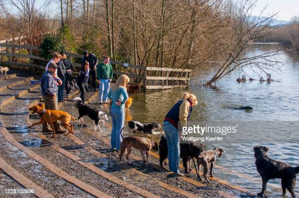 People with dogs at the Snoqualmie River in the 40-acre off-leash dog park in Marymoor Park, Redmond, Washington State, USA.