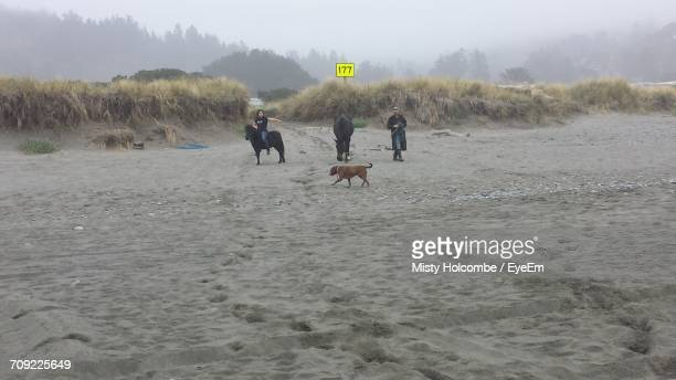 People With Horse And Dog At Beach During Foggy Weather