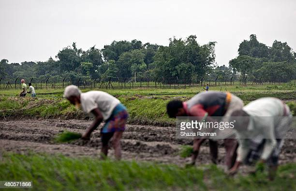 People work in a field near the India/Bangladesh border fence July 10 2015 in Lalmonirhat District Bangladesh The India Bangladesh enclaves also...