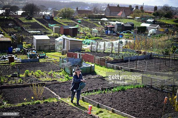 People work in their allotments in Berwick-upon-Tweed on March 26, 2014 in England. England's most northern town close to the Scottish Border awaits...