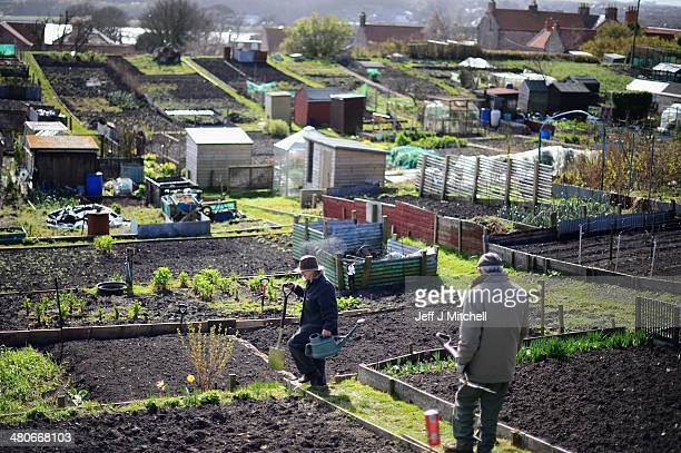 People work in their allotments in BerwickuponTweed on March 26 2014 in England England's most northern town close to the Scottish Border awaits to...