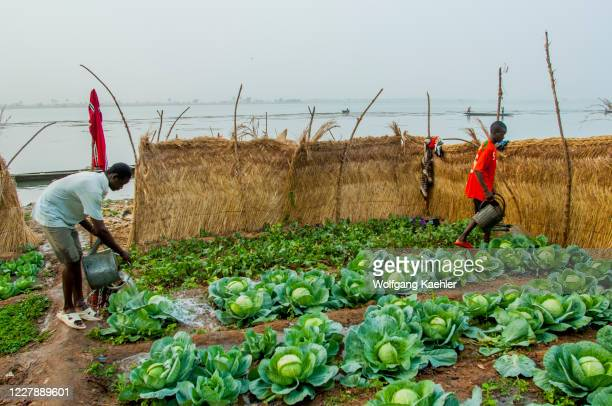 People working in a small vegetable garden on the banks of the Niger River in Segou, a city in the center of Mali, West Africa.