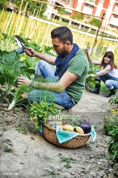 Les personnes travaillant dans un jardin urbain ville de légumes
