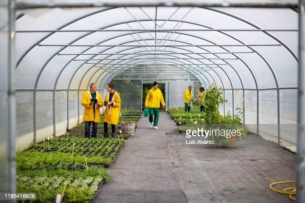people working in greenhouse - umweltschutz stock-fotos und bilder
