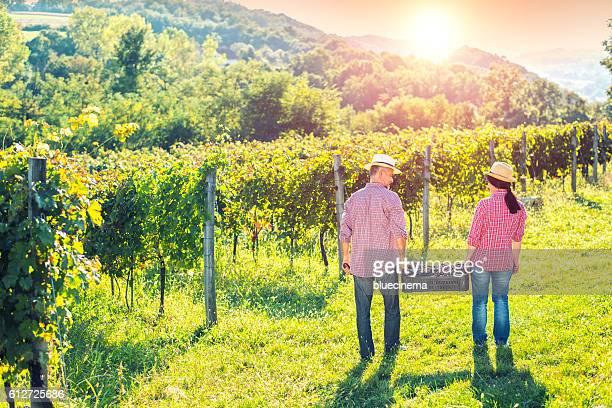 People Working in Vineyard