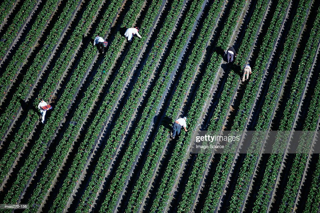 People working on a arable farm