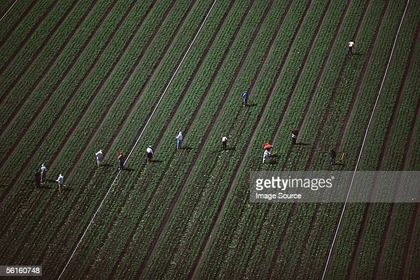 People working on an arable farm