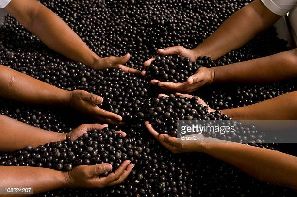 People's Hands Reaching Into Acai Berries