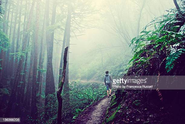 peraon walking in woods - muir woods stock photos and pictures
