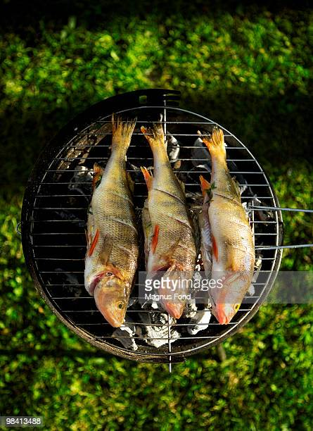 perch on barbecue sweden. - perch fish stock pictures, royalty-free photos & images