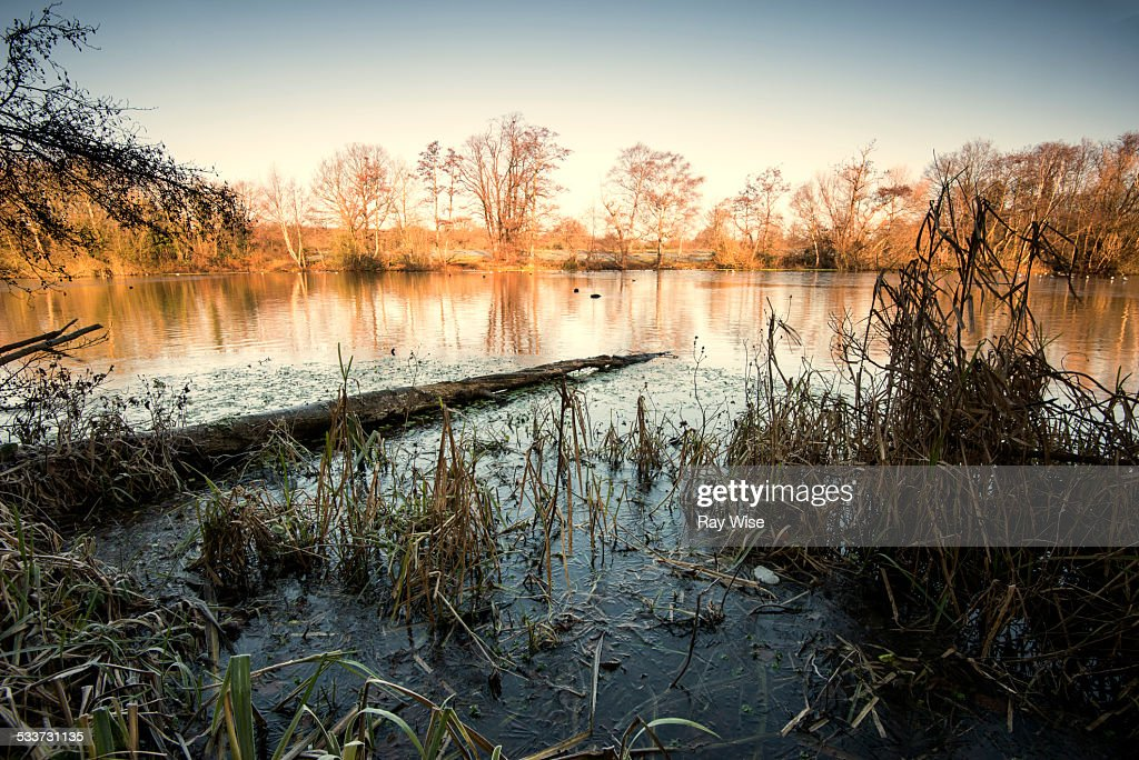 Perch Pond - in winter : Foto stock
