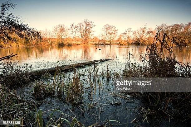 Perch Pond - in winter