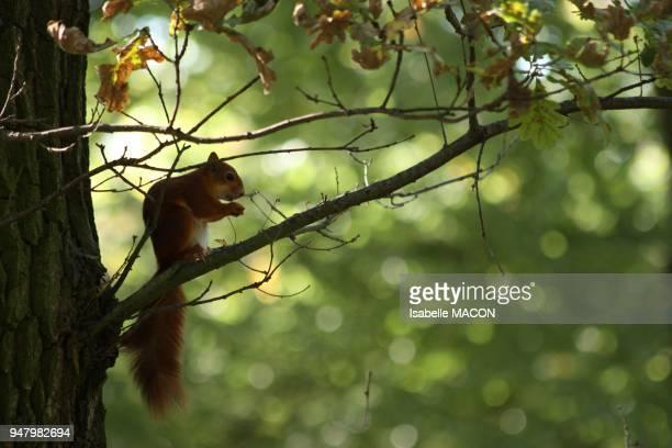 perche sur une branche Vincennes France