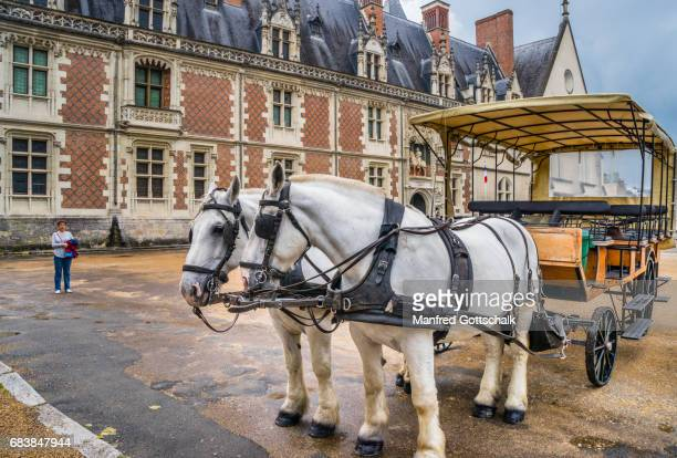 Percheron draft horses at Blois Castle