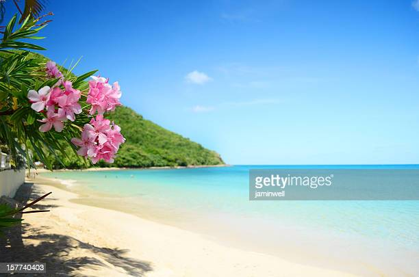 perfect beach - idyllic stock pictures, royalty-free photos & images