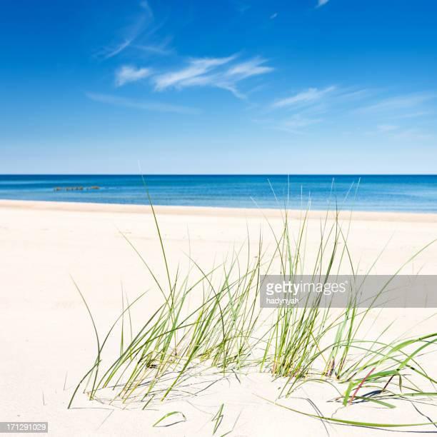 完璧なビーチの砂丘と海
