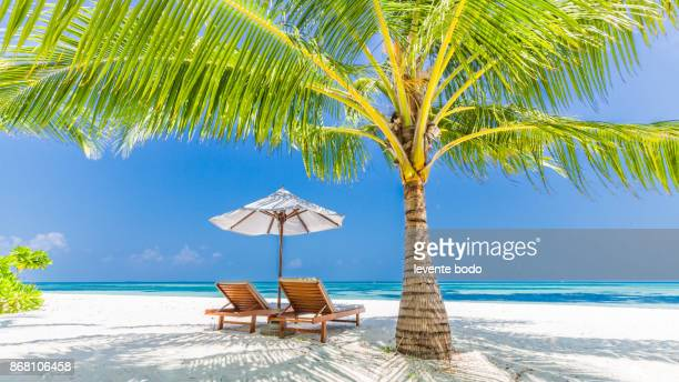 perfect beach view. summer holiday and vacation design. inspirational tropical beach, palm trees and white sand. tranquil scenery, relaxing beach, tropical landscape design. moody landscape - cadeira recostável - fotografias e filmes do acervo