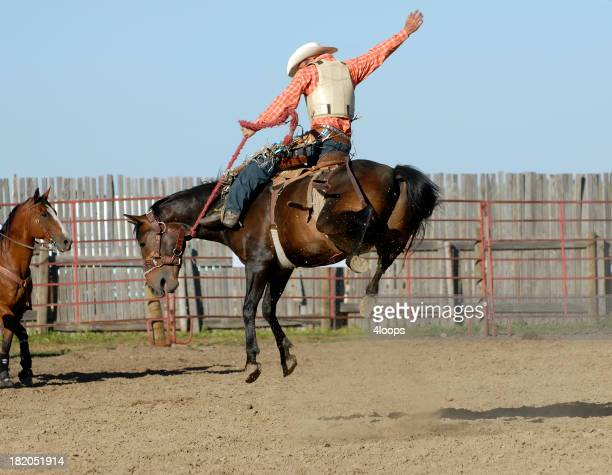 Perfect cowboy form on wild bucking horse