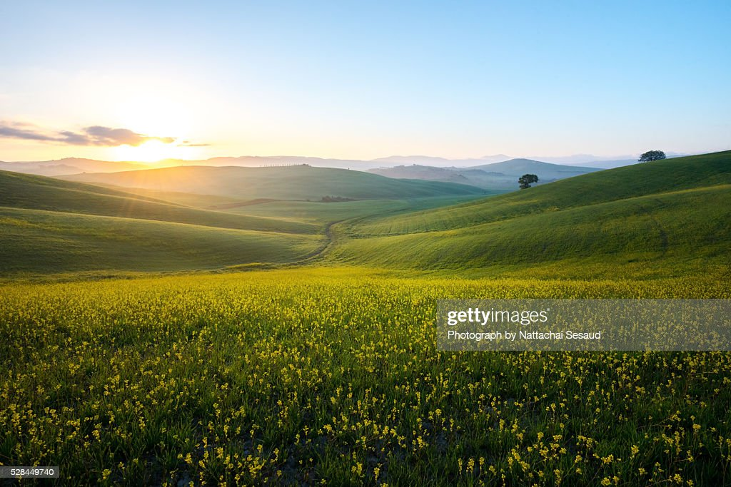 Perfect field of spring grass,Tuscany,Italy : Stockfoto