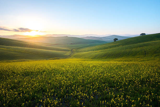 perfect field of spring grass,tuscany,italy - horizontal stock pictures, royalty-free photos & images