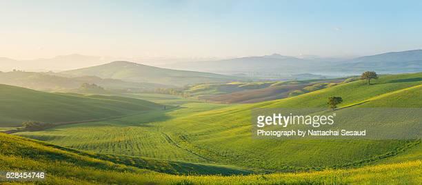 perfect field of spring grass,tuscany,italy - pascolo foto e immagini stock