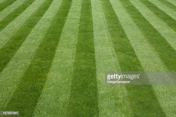Perfect freshly mowed lawn in field