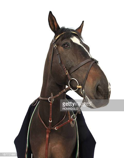 Perfect horse isolated on white