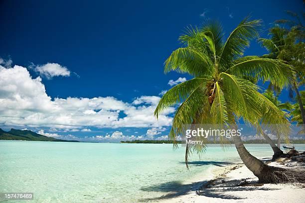 Perfeito Praia de palma Bora-Bora