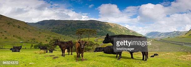 perfect pastoral panorama - paddock stock photos and pictures