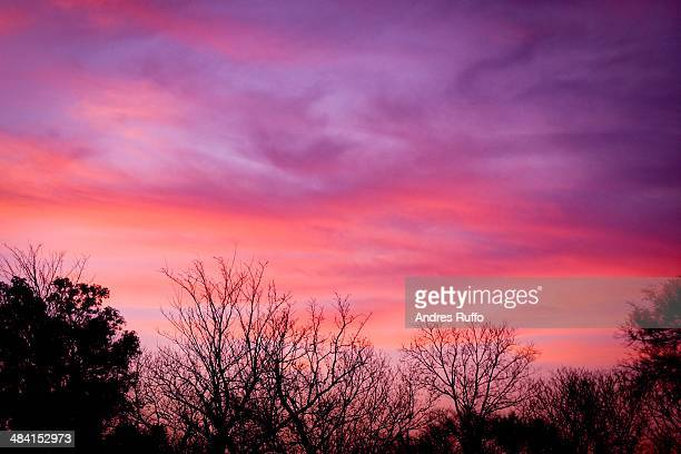 perfect purple! - andres ruffo stock pictures, royalty-free photos & images