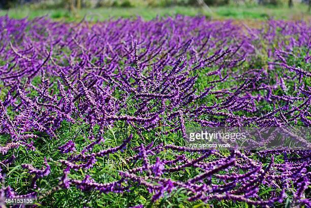 Perfect Purple!