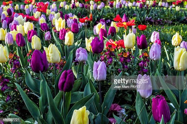 perfect purple! - jean marc payet fotografías e imágenes de stock