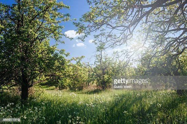 Perfect summer grassland