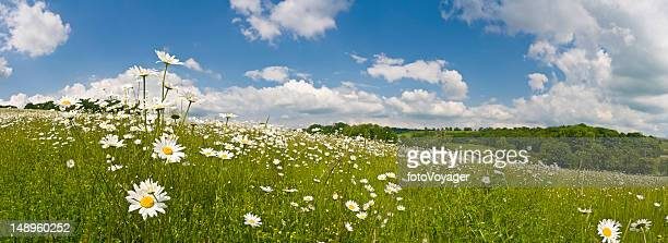 Ideal summer meadow