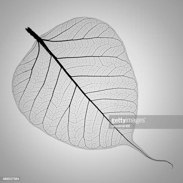 perfect transparent leaf skeleton extremely detailed