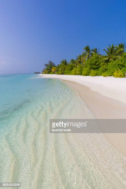 Perfect tropical island. Maldives paradise beach. Beautiful palm trees and tropical beach. Moody blue sky and blue lagoon. Luxury travel summer holiday background concept.
