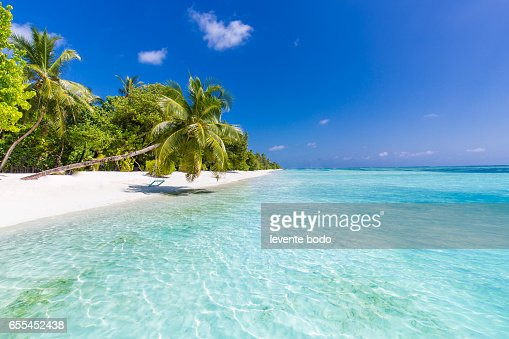 Tropical Island Beach Ambience Sound: Perfect Tropical Island Maldives Paradise Beach Beautiful