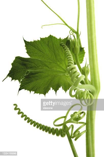perfect vine