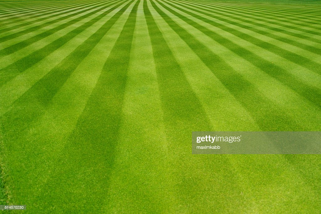 grass field background. Free Grass Field Background Images, Pictures, And Royalty-Free Stock Photos - FreeImages.com