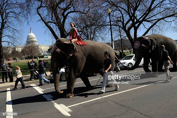 """Performer Mariya Klose - a """"lovely"""" in circus parlance - rides atop one of the elephants from the Ringling Bros. And Barnum & Bailey Circus near the..."""