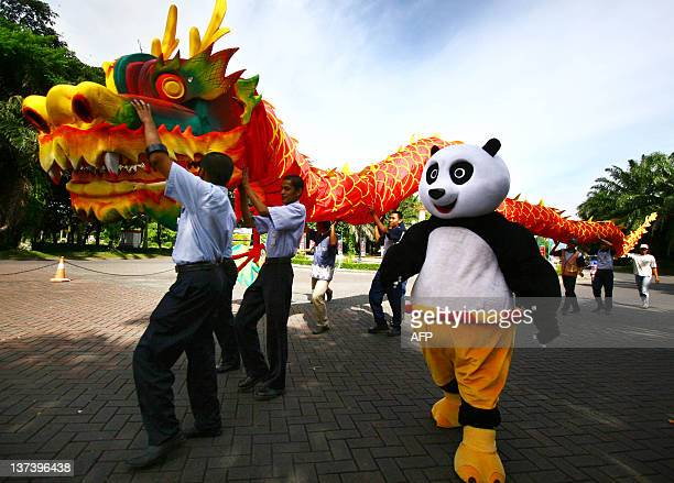 A performer wearing a Panda costume parades along with an 18 meter long dragon at Malang city park in East Java province on January 20 2012 ahead of...