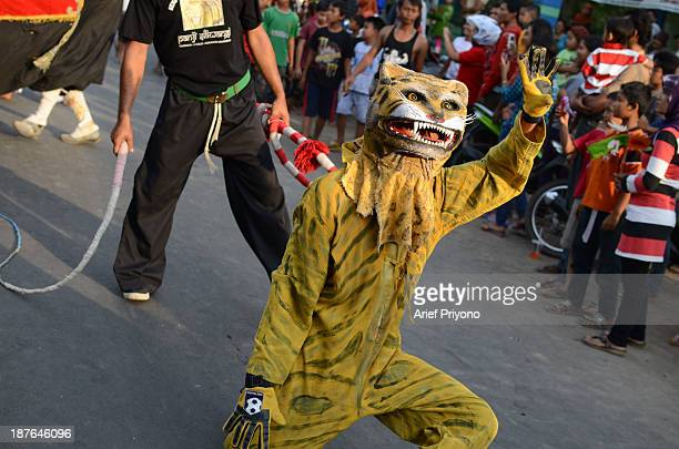 A performer wearing a Tiger costume in a traditional art performance known as Bantengan in Trowulan village Bantengan is a traditional Indonesian...