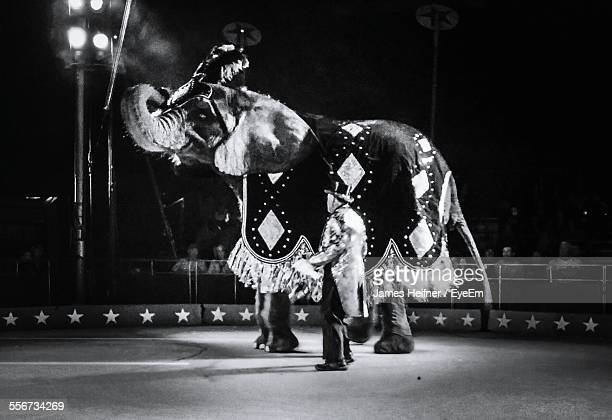 performing elephant with instructor at circus - 動物芸 ストックフォトと画像
