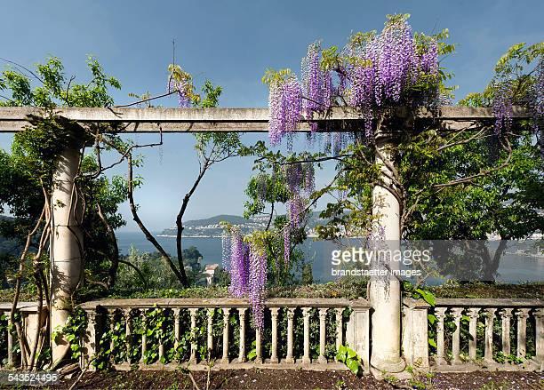 Pergola with wisteria in the garden of the Villa Ephrussi de Rothschild on Cap Ferrat About 2000