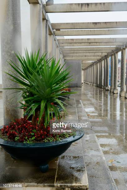 pergolado lateral of the cathedral of the sé of aveiro pt in rainy day of october of 2018 - vista lateral stock pictures, royalty-free photos & images
